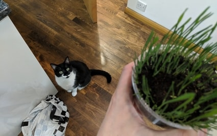archie want grass