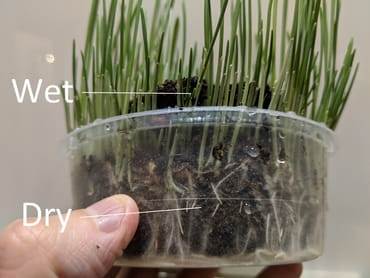 cat grass dry bottom