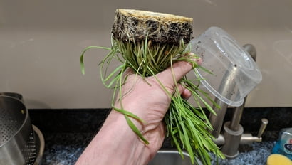 cat grass upside down shake out water