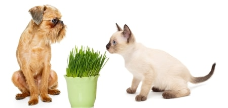 cat and dog with grass