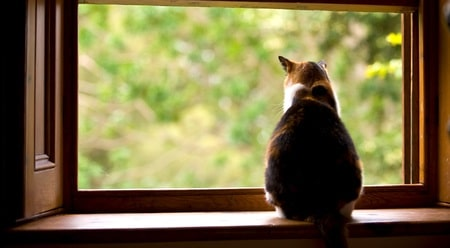 cat looking outside
