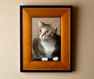 family cat memorial picture