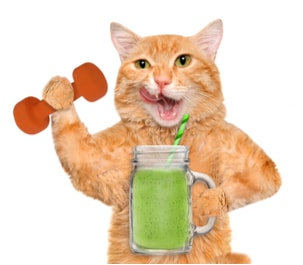 cat fitness and detox