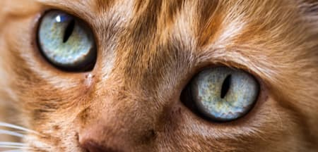 closeup of cat to see eyes