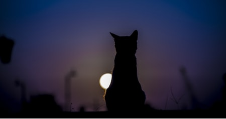 cat in silhouette at night